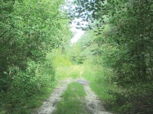Droga prowadząca do Gałęzowa